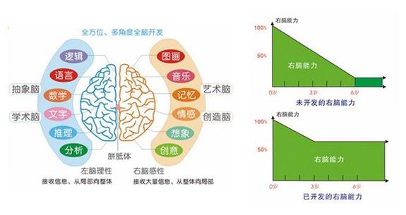 全脑教育什么时候好